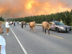 Colorado Wildfire - Photo Posted By User On Facebook