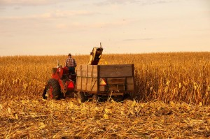 The Price Of Corn Hits A Record High As A Global Food Crisis Looms - Photo By Carl Wycoff