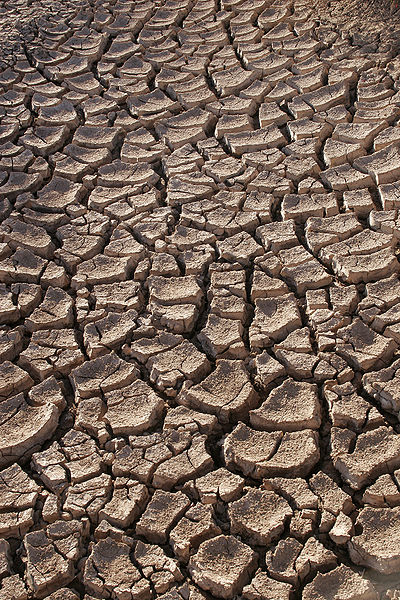 During The Years Of Plenty, Prepare For The Years Of Drought - Photo Taken By Tomas Castelazo