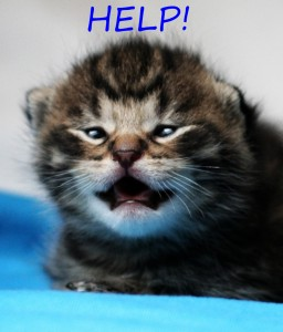 LoLCat - Help!