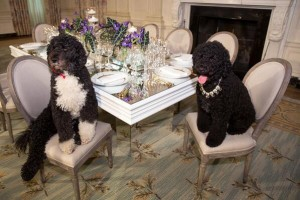 Dogs In The White House