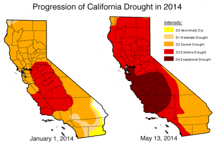 The Meat Crisis Is Here: Price Of Shrimp Up 61% – 7 Million Pigs Dead – Beef At All Time High California Drought 2014 425x280