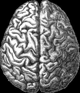 Brain - Public Domain