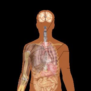 Ebola Symptoms - CDC