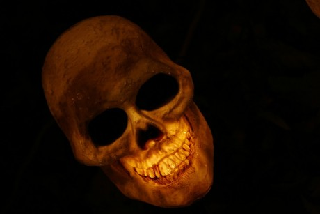 Skull Smiling - Public Domain