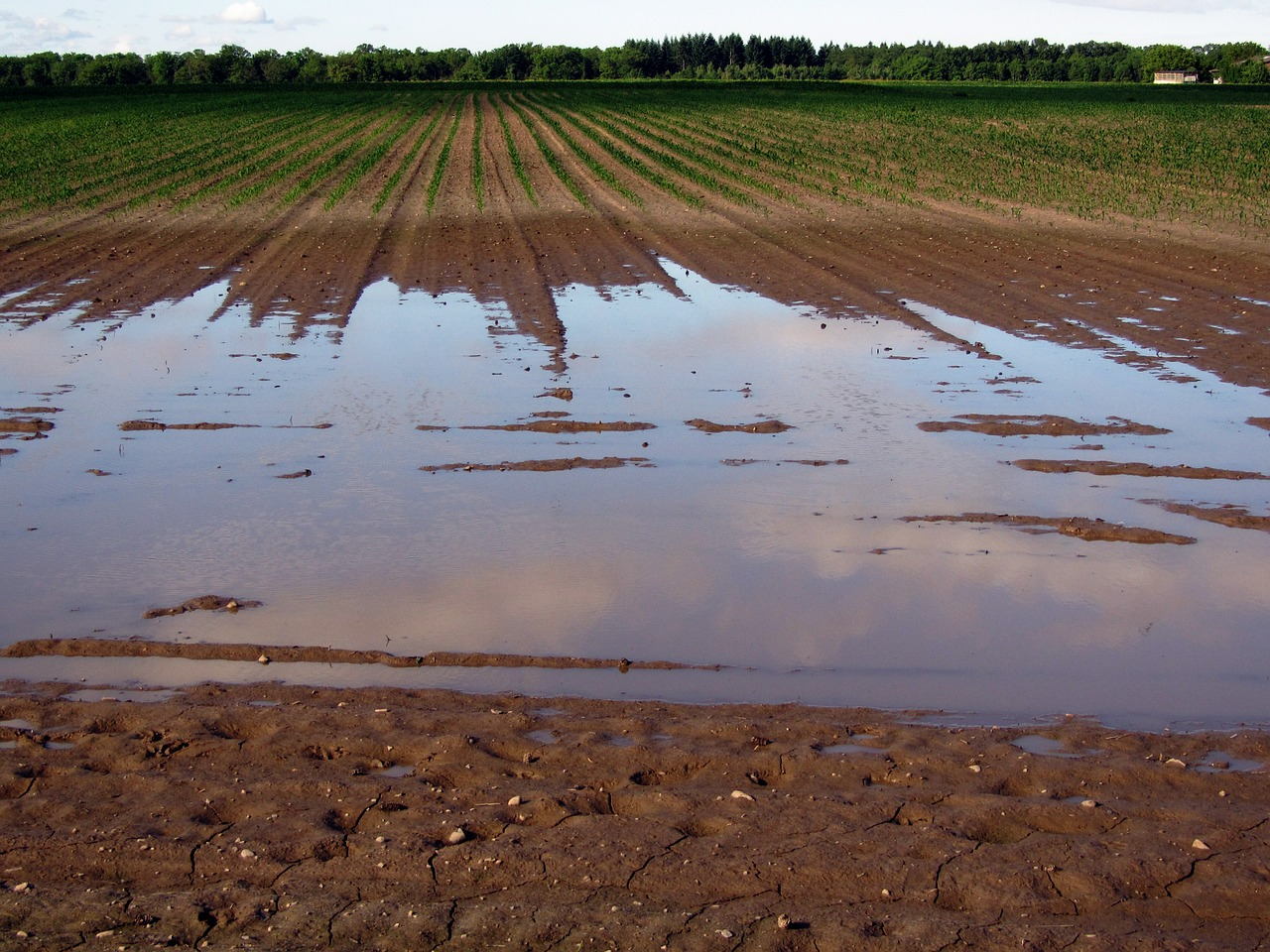 THE ECONOMIC COLLAPSE – Total Catastrophe For U.S. Corn Production: Only 30 Percent Of U.S. Corn Fields Have Been Planted